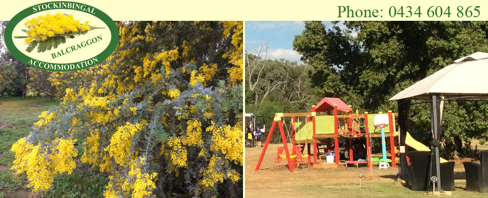 Cootamundra Wattle in full bloom - Playground fort and gazebo for safe supervision
